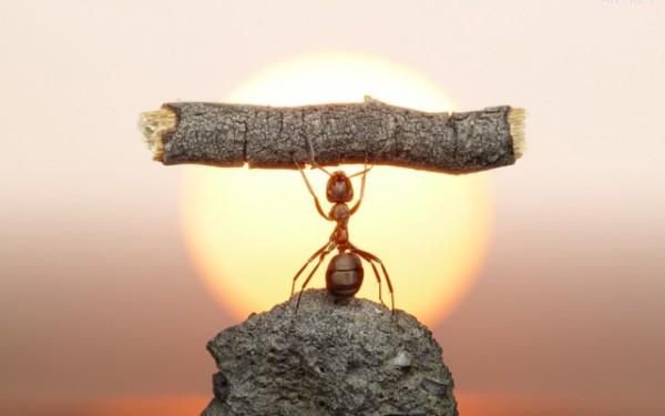 Ant-power