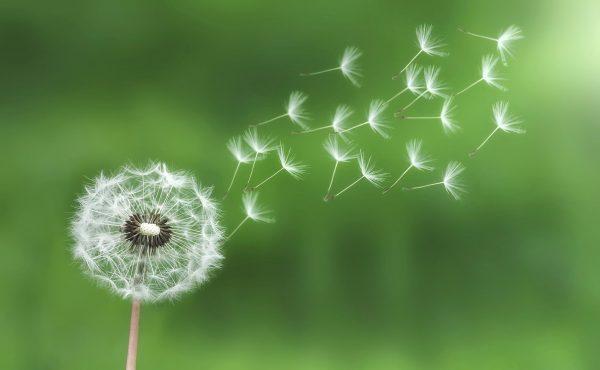 dandelion-bess