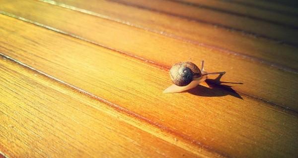 snail-624971_1280
